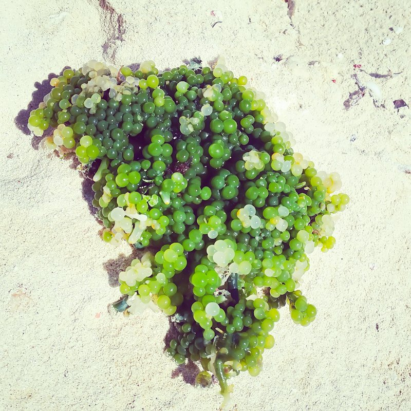 sea grapes green caviar