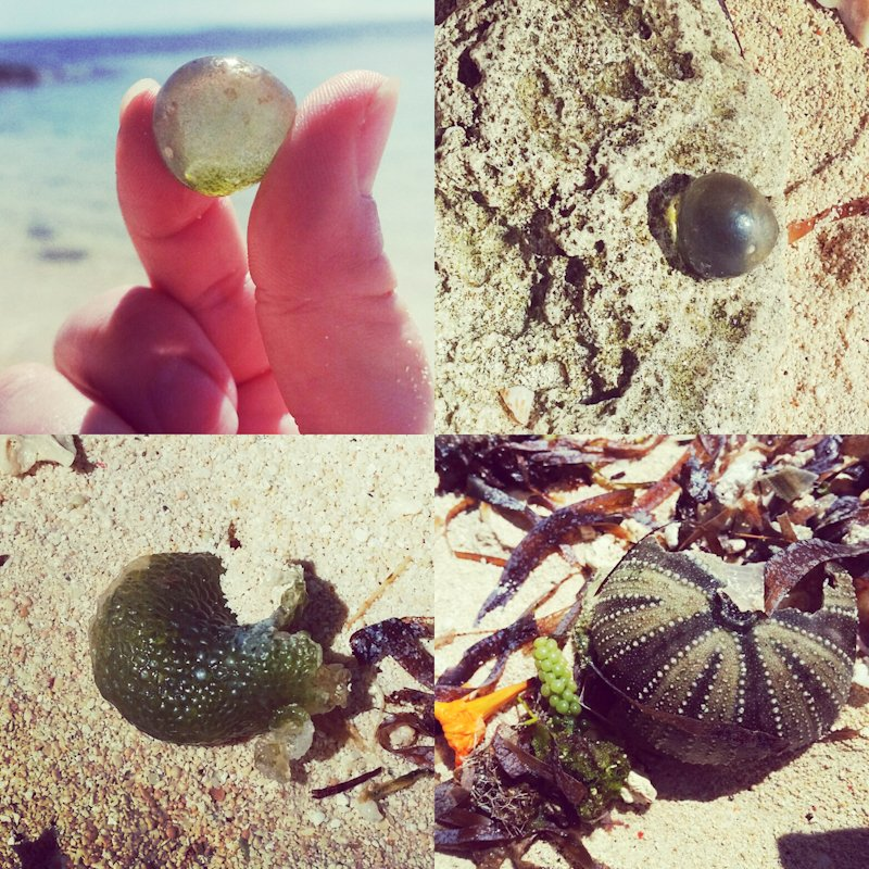 beach finds green caviar